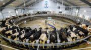 «ЭкоНива» за 9 месяцев увеличила производство молока на 57%, до 550 тыс. т