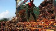 Индия прекратила бойкот пальмового масла из Малайзии