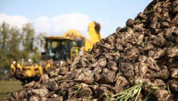 Минсельхоз решил уменьшить посевы сахарной свеклы на 15% в 2020 году