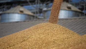 Поставки пшеницы в Казахстан угрожают президентским майским указам