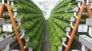 В Москве открылась первая очередь сити-фермы