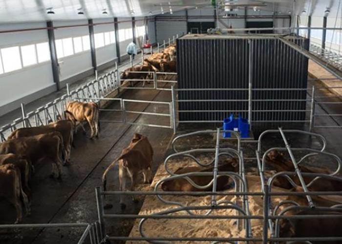 В Томской области заработала первая роботизированная молочная ферма в формате малого бизнеса введена