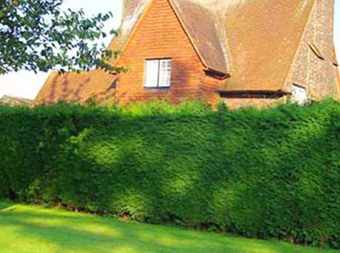 Живая изгородь в ландшафтном дизайне: создание и стрижка
