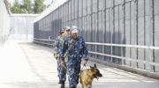 Экс-министра сельского хозяйства Тувы приговорили к четырем годам колонии за мошенничество