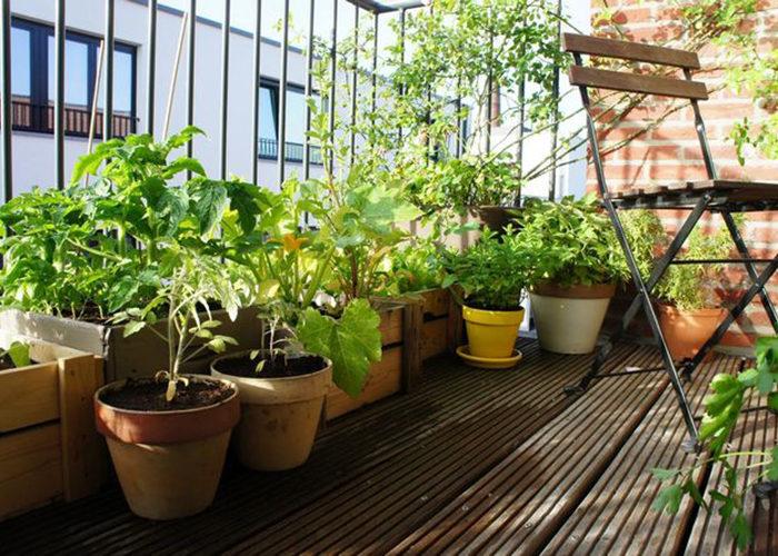 Как я хотел посадить в квартире сад мечты