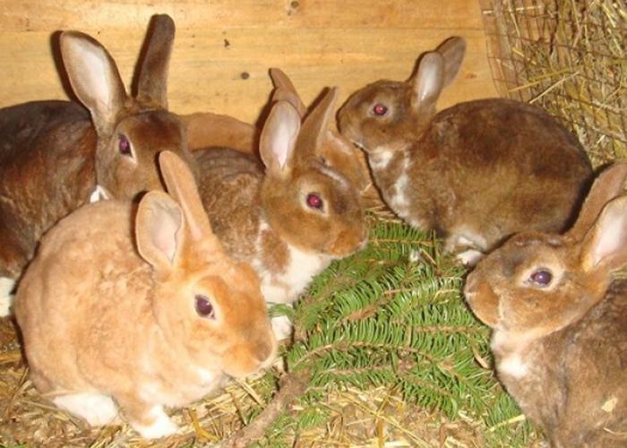 Кормление кроликов для начинающих