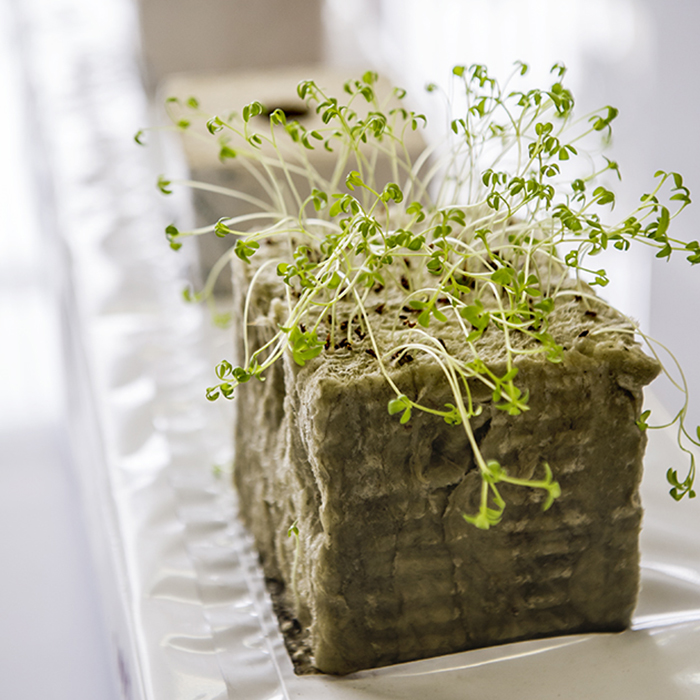 Микрозелень для макропользы правила выращивания