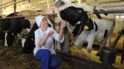 Минсельхоз Татарстана рекомендует сельхозпроизводителям соблюдать меры по предотвращению распространения АЧС
