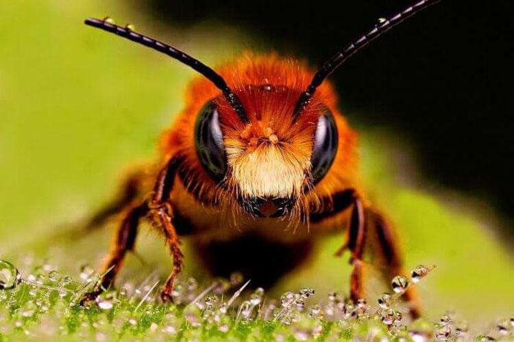 Могут ли пчелы быть умнее людей?