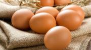 Повышаем яйценоскость кур