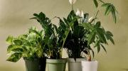 Ученые: комнатные растения не улучшают воздух в помещении