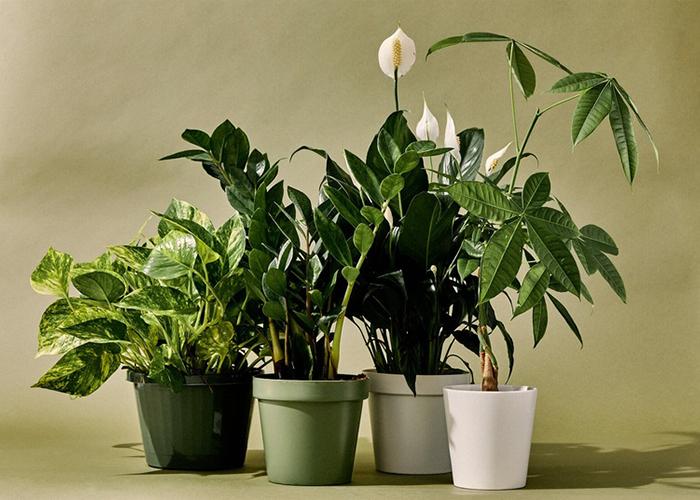 Photo of Ученые: комнатные растения не улучшают воздух в помещении