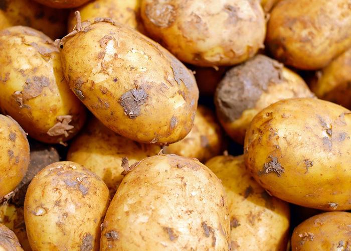 Урожай картофеля будет выше прошлогоднего