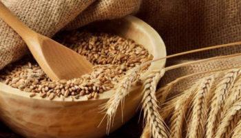 В Татарстане определили сорта сельхозкультур с наибольшей урожайностью