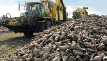 В Татарстане завершена уборка сахарной свёклы, собрано 2,8 млн. тонн урожая