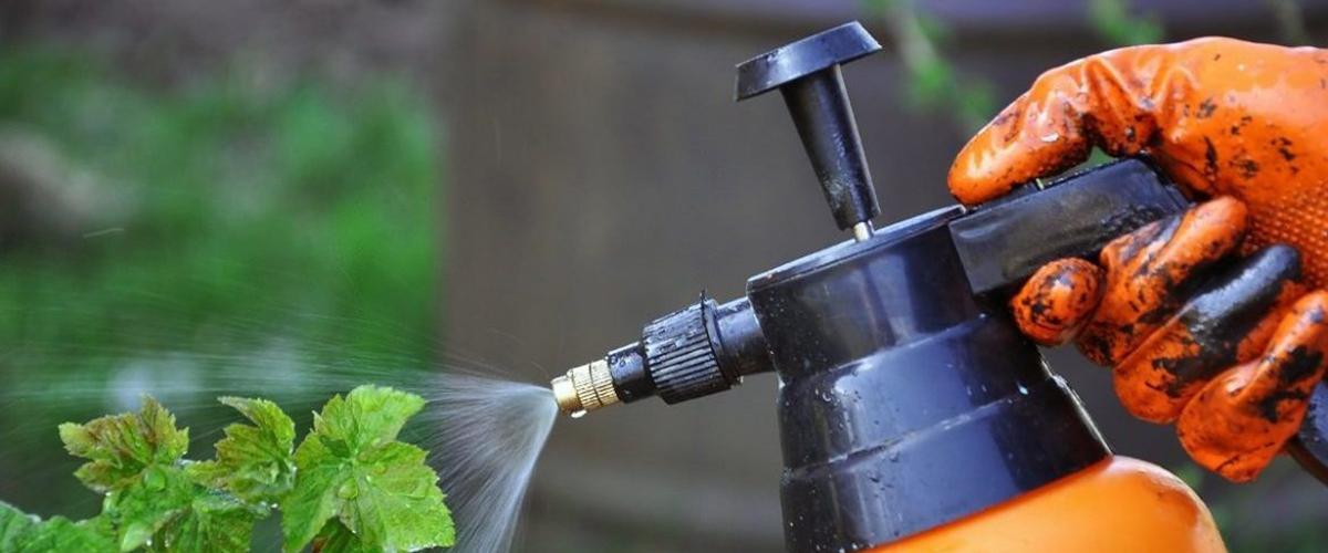 Весенняя обработка сада от болезней и вредителей