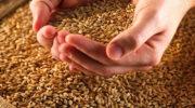 Минсельхоз предлагает создать единую информационную систему контроля за производством и реализацией зерна