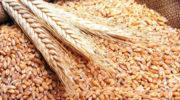 Российский зерновой союз назвал дискриминационными новые правила для карантинных сертификатов на зерно