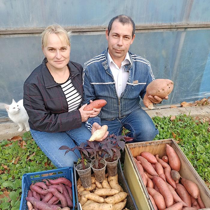 Экзотика в помощь или как семья луцан стала батат выращивать