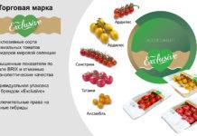 Новая линейка томатов Exclusive поступит в продажу к Новому году