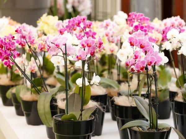Причины пересадки орхидеи