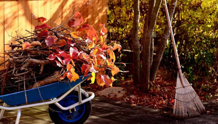Последние заботы: что нужно сделать, чтобы подготовить сад к зиме