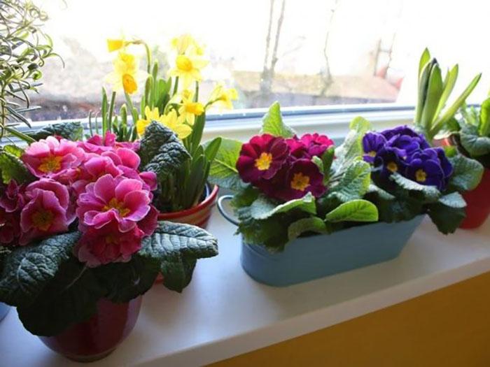 Правила выращивания цветов на кухне