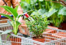 Что делать с цветами после покупки, как правильно ухаживать