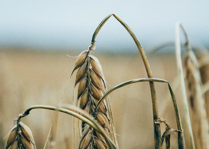 Ущерб аграриев от ЧС приблизился к 13 млрд рублей