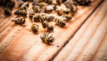 Ущерб от гибели пчел в Удмуртии составил 1,5 миллиона рублей