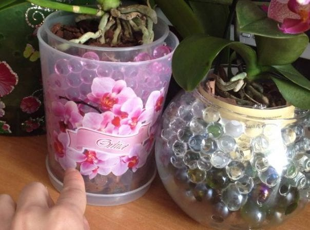 В какой горшок пересадить орхидею-min