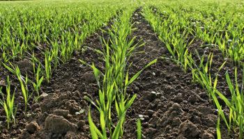 В Татарстане разрабатывается план обновления семян под урожай 2020 года