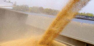Из порта Крыма в Сирию отправят 250 тыс. тонн зерна