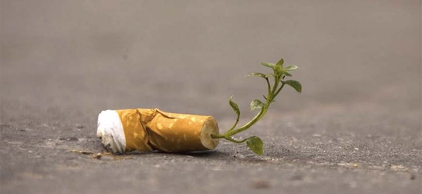 Окурки для выращивания растений будут использовать в Италии
