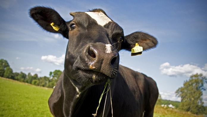 Photo of Опубликовано решение ЕЭК, исключающее запрет на использование сырья лейкозных коров