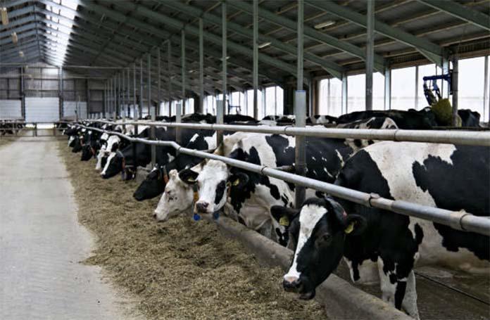 Восемь новых ферм откроют в Коми в 2020 году