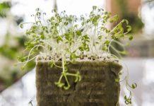 Как вырастить рассаду со здоровой корневой системой