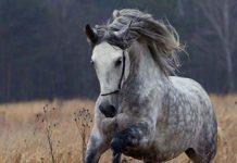 Лошади редких мастей