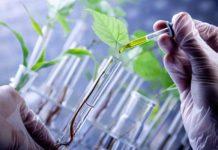 Нанотехнологии в защите растений правда или вымысел