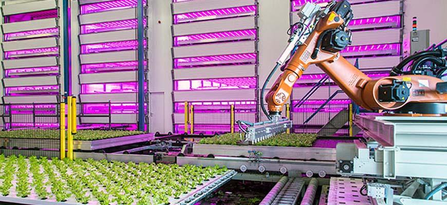 Вертикальные поля, где роботы-агрономы занимаются традиционным крестьянским трудом. Остается только понять, чем займутся оставшиеся без работы люди?