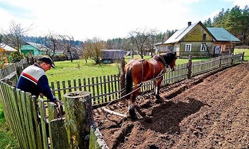 Photo of Госпрограмма развития села в России будет сокращена