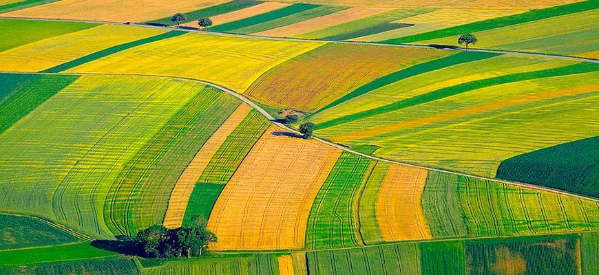 Два пути для агробизнеса будущего