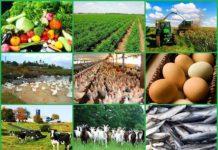 Эксперты определили наиболее рентабельные отрасли ведения фермерских хозяйств в России-min
