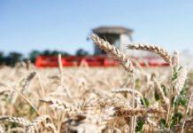 Экспорт сельхозпродукции в Ростовской области пошёл на спад