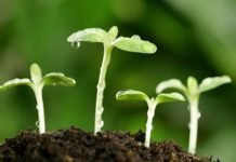Источник азота для ваших растений