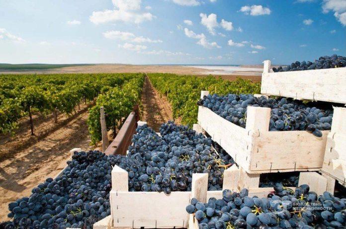 Крым выполнил треть годового плана по экспорту за счёт Украины и Абхазии