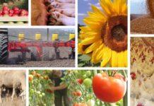 Производство сельхозпродукции в Беларуси в январе выросло на 4,5%