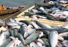 Россия выделила Беларуси квоты на вылов рыбы и креветки в двух морях на 2020 год