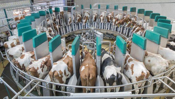 В Башкирии завершили строительство роботизированной молочной фермы