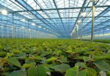 В Новгородской области втрое вырос урожай тепличных овощей